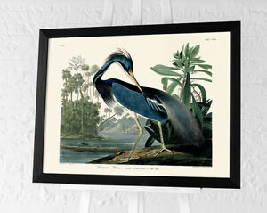 John James Audubon Framed Art Prints 60 x 80cm Bird Pictures