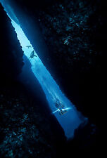 IN THE DEEP 47 METERS DOWN MANIFESTO JAWS SHARKS CLAIRE HOLT MANDY MOORE