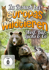 Children DVD To Visit At Europe Wild animals