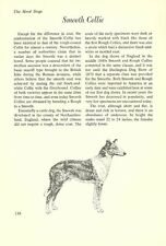 "The Smooth Collie - Vintage Dog Art Print - Matted ""G"""