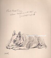 Vintage Dog Print 1937 Cautious Red Bull Terrier Lucy Dawson Aka Mac