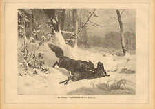 Fox Has Rabbit For Lunch, Rabbit, Fox, Winter, Vintage 1881 German Antique Print