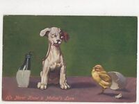 Dogs 1910 Comic Postcard 437a