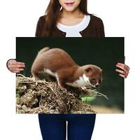 A2 | Brown Weasel Wild Animals Nature Size A2 Poster Print Photo Art Gift #12767