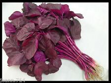 Asian Chinese Greens Spinach vegetable, EDIBLE RED AMARANTH :12000 seeds =10g
