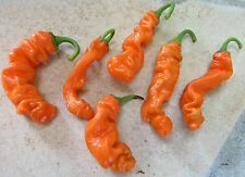HOT CHILLI PETER PEPPER ORANGE  15 SEEDS
