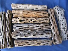 CHOLLA WOOD - WASHED & CLEAN 5 GIANT PCS