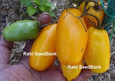 Yellow Roma Tomato - Golden Yellow Version of the Red Roma Tomato - 10 Seeds!!!