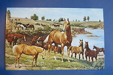 Vintage Cutter Bill Western World Postcard NOS