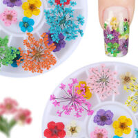 12 Color Real Dry Dried Flower Leaves 3D UV Gel Acrylic False Tips Nail Decors