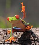 crazy frog tackle