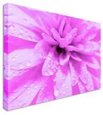Pink Floral Flower Canvas Wall Art Picture Print
