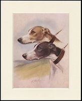 GREYHOUND TWO DOGS HEAD STUDY LOVELY DOG PRINT MOUNTED READY TO FRAME
