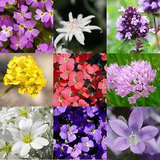 250 Samen Steingarten-Blumenmischung Blaukissen Edelweiß Steinkraut