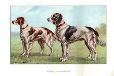 Stampa Antica CANE = MUNSTERLANDER = 1930 Chien Dog Old Antique Print