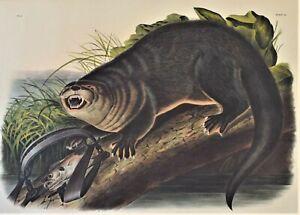 Antique Print Colored Lithograph Canada Otter 1844 John James Audubon