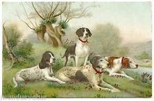 Dogs Chasse. Hunting Dogs