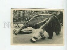 3175902 Anteater in Leningrad Zoo old Photo Russia