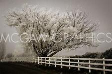 "WINSTON, DAVID LORENZ - FROSTED TREE & FENCE -ART PRINT POSTER 11"" X 14"" (1587)"