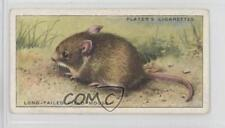 1939 Player's Animals of the Countryside #28 Long-Tailed Field Mouse Card 1md