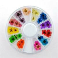 12 Colors Real Dried Flowers Nail Art Decoration DIY Tips Decor Manicure Wheel Y