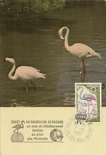 CP MAXIMUM PREMIER JOUR FLAMANT ROSE 1981