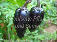 🔥 Black Hungarian süss 10 Samen Chili schwarz * aus Ungarn * für Kübel Balkon