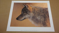Morton Solberg  - Timber Wolf Study - Limited Edition Print