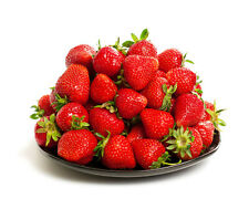 50 Albion Everbearing Strawberry Plants - Flavor, High Yields, Disease Resistant