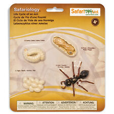 Life Cycle Of An Ant Figures Safari Ltd NEW Toys Educational Figurines