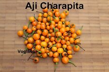 Aji Charapita 10 Samen wilder Chili aus Peru teuerste Chili der Welt