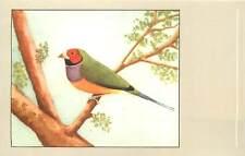 Redheaded gouldian finch bird postcard