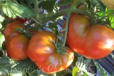 10 graines de tomate rare BrandyFred Dwarf Tomato Project seeds bio