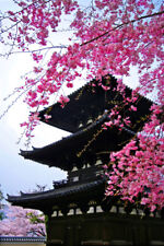 SUPERB JAPANESE CHERRY BLOSSOM PAGODA CANVAS #190 QUALITY PICTURE WALL ART