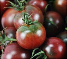 20 Dark Tomato Seeds Green Stripe Lycopersicon Esculent Organic Vegetables