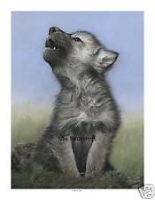 'Little Chief' Limited Edition Print, Wolf Pup Print