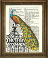 PEACOCK ON BIRD CAGE ANTIQUE DICTIONARY BOOK PAGE ART: Lovely Vintage Print