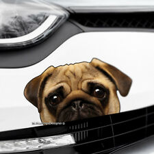 PEEKING PUG Dog Peeper Funny Novelty Car,Van,Bumper,Window Vinyl Decal Sticker