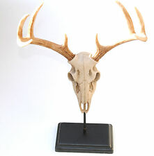 Faux Deer Skull - Small Table Top Faux Taxidermy Buck Skull on Stand