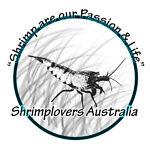 Shrimplovers