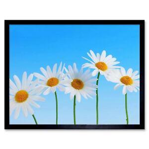 Daisy Flowers Blue White 12X16 Inch Framed Art Print