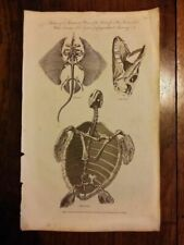 Engraving Animals Original Art Prints