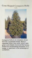 Cone Shaped Compacta Holly Shrub 3 gal. New Healthy Hedge Plant Landscape Tree