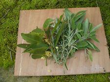 Borsa di Norfolk Biologiche fresche cucina, cucinare erbe, bay, Salvia, Rosmarino