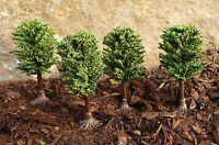 """4-STÜCK Jordan Bäume LAUBBÄUME mit Fuß 6cm """"Made in GERMANY"""" für Spur N      7G"""