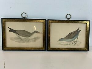 Antique Lil Crake & Cinerous Shearwater History of British Birds Framed Prints