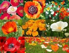 150 + POPPY POWER FLOWER MIX SEEDS FREE USA SHIPPING POPPY SEED
