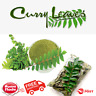 100% Organic Ceylon Sun Dried Curry Leaves 100g Quality Sri Lankan Products