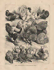 Harrison Weir, Prize Birds, Crystal Palace, Poultry Show, 1870 Antique Print,