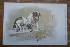 TWO FRENCH DOGS  ON WINDOW SILL  VINTAGE POSTCARD